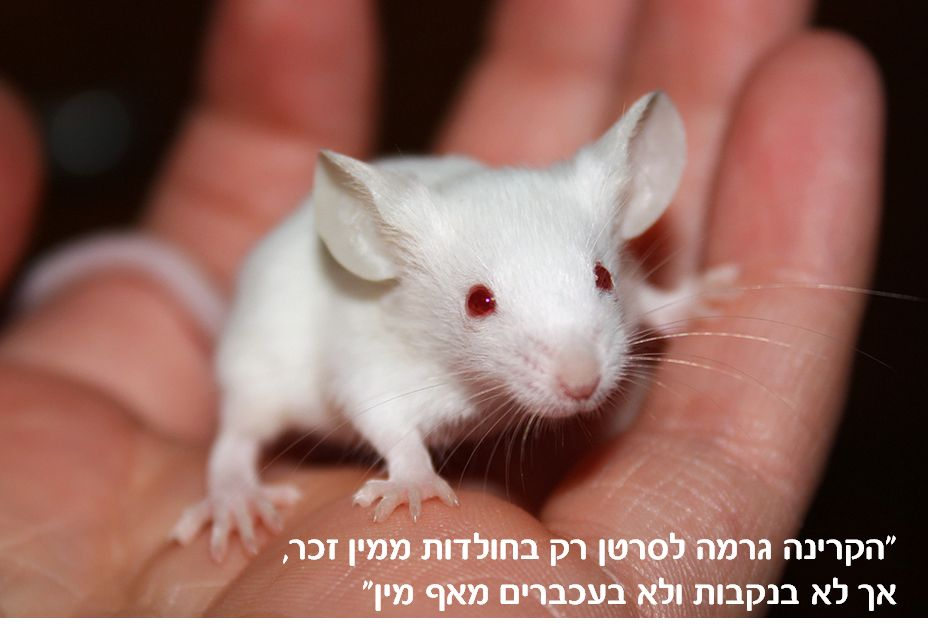 mouse_quote