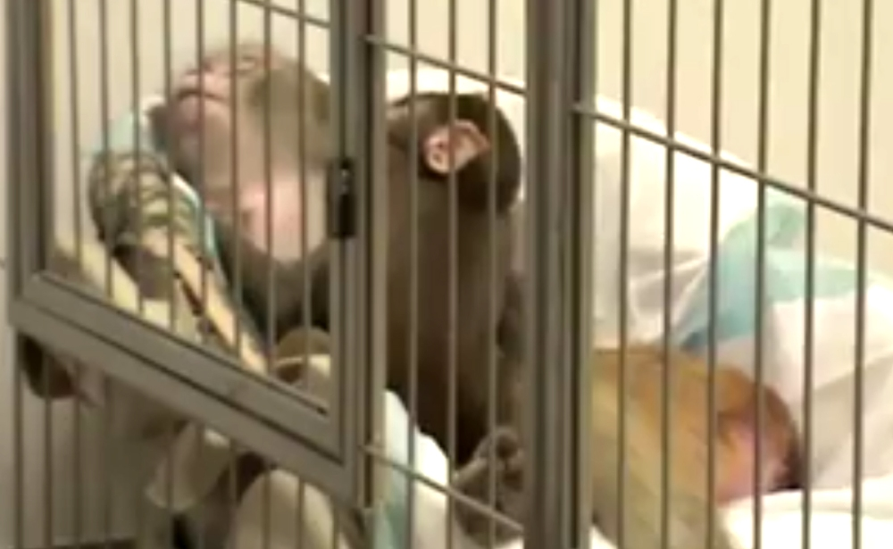 peta-monkey