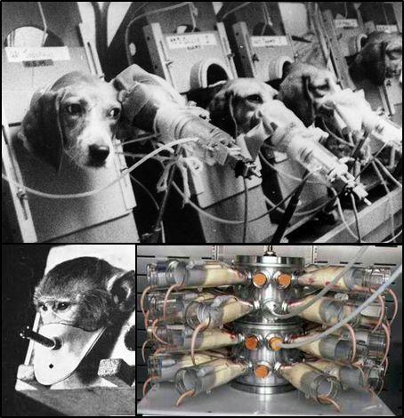 """ניסויים בתחום העישון נעשים מזה עשורים רבים במגוון בעלי חיים, כולל מכרסמים, כלבים וקופים, ואף שמשו את תעשיית הטבק כדי """"להוכיח"""" שסיגריות אינן מזיקות לבריאות ולהגן על עצמן משפטית."""